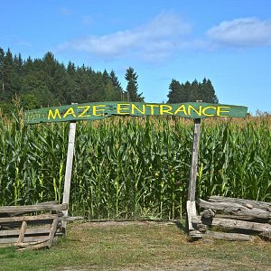 The Maze Entrance sign at McNab's Corn Maze, now open until October 31st 2019