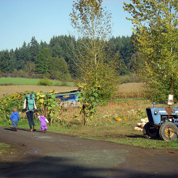 A mother walking with two young children on their way to the corn maze at McNab's farm