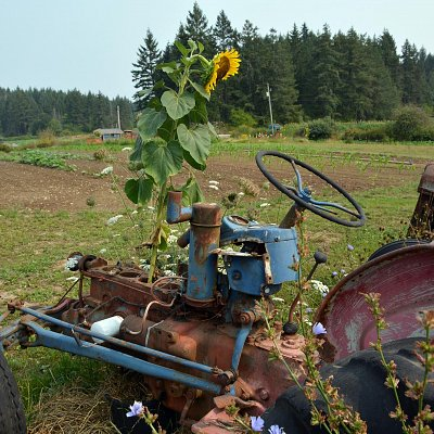 sunflower-powered-tractor-01