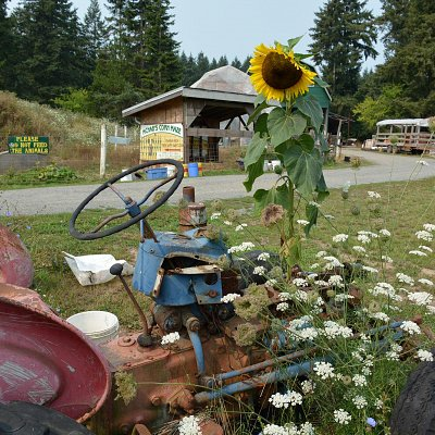 sunflower-powered-tractor-02