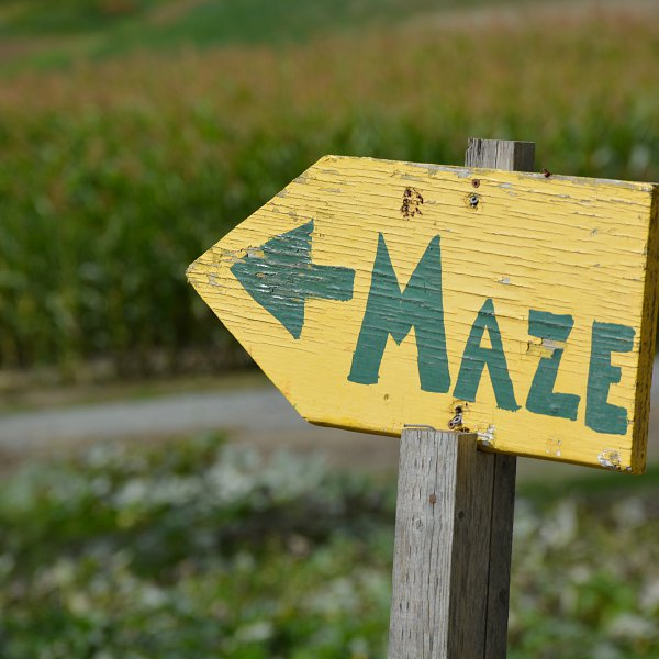 "An arrow-shaped sign that says ""maze"" pointing to a corn maze to the left"