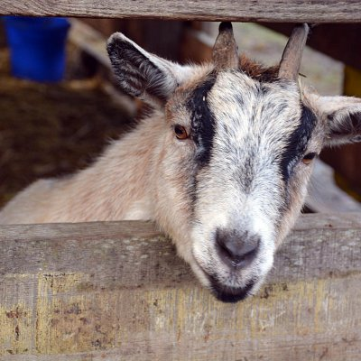 mcnabs-farm-animals-05