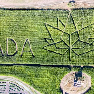 A composite image of the 2017 McNab's Farm corn maze, taken by a drone