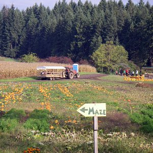 The hay wagon takes a group of people to the pumpkin patch