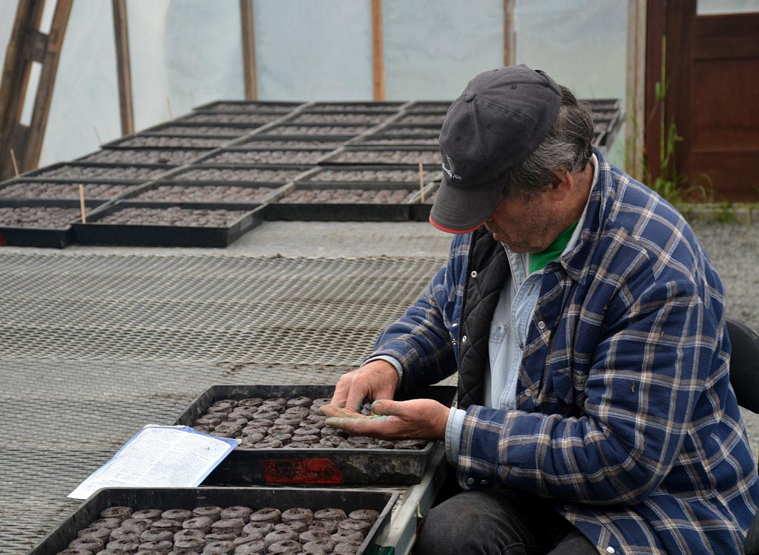 Murry McNab, planting 10,000 peat pellets of pumpkins by hand