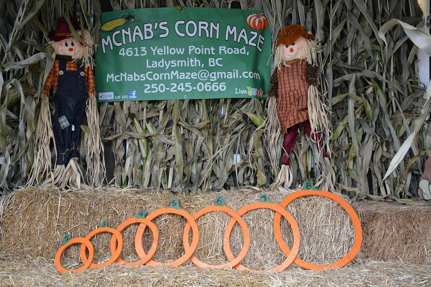 Pumpkin measuring rings at McNabs Corn Maze