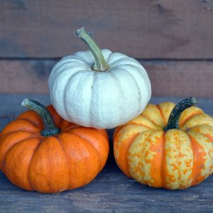 Three mini pumpkins stacked on top of each other