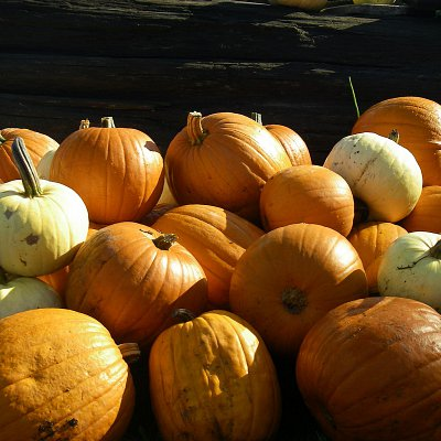 mcnabs-pumpkin-patch-11