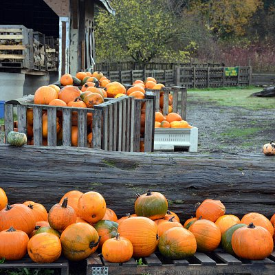 mcnabs-pumpkin-patch-13